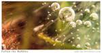 Follow the Bubbles by radu-jm