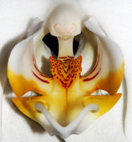 White Orchid 01 by s-kmp