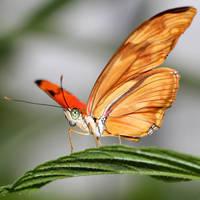 Butterfly Vl by s-kmp