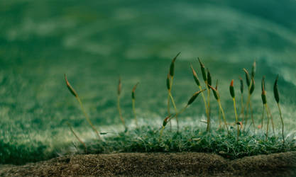 Moss by monsterlienchen
