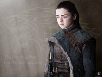 Arya Stark by CrisisEnvy