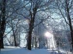 Snow forest by JoJoAsakura