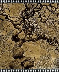 wooden hag by Attila-G