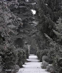 rimy path by Attila-G