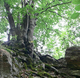 solidly rooted by Attila-G