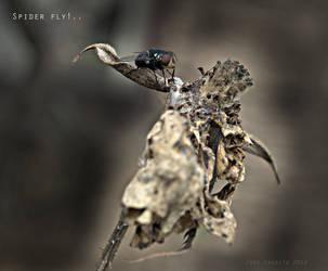 Spider Fly by blindingraven