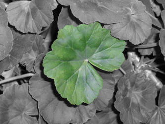 Leaf by redcrystal