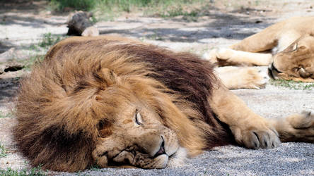 Dreaming savannah by ilNeofita