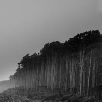 Trees by lomatic