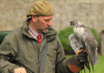 Andy and his gyr falcon by piglet365