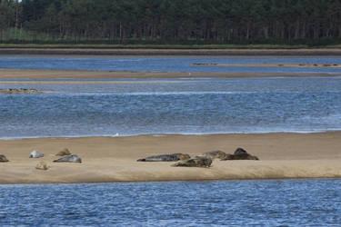 Loch Fleet slugs by piglet365