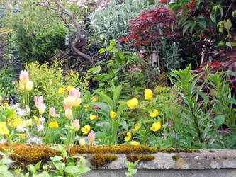 My back garden by piglet365