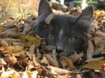 Cat in Autumn by Misstymeeadows