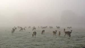The Deer by MichaelJTopley
