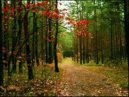 autumn impression by ameProfonde