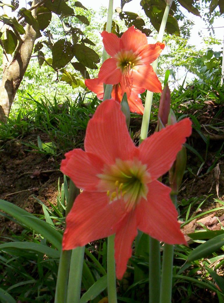 Dragon Lily Nude Photos 30
