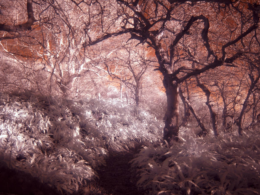 The Twisted Forest by Somasemaj