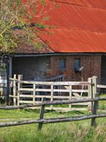 Old Barn on the Marsh by Somasemaj