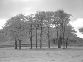 Infra Red Trees by Somasemaj