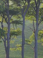 3 Trees by Somasemaj