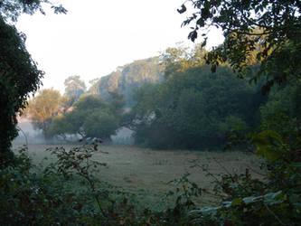 Early Morning Pasture by Somasemaj