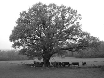 Timeless Image of Farming by Somasemaj