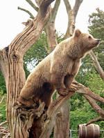 Bear by greenka87