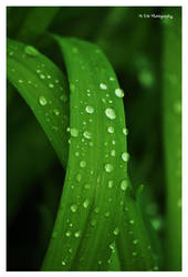 Raindrops by erbphotography