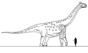 Stem-Bird Files: Camarasaurus supremus by randomdinos