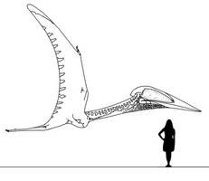 Stem-Bird Files: Balaur by randomdinos