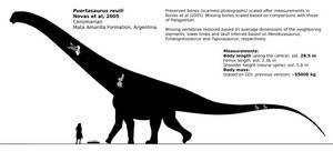 Puertasaurus reuili schematic. by randomdinos