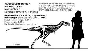 Tarbosaurus bataar (juvenile) reconstruction. by randomdinos
