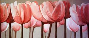 tulips by isismas
