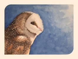 Barn Owl by Jb-612