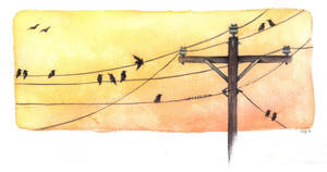 On a Wire by Jb-612