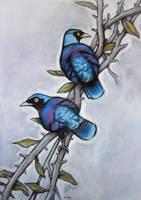 Glossy Starlings by Jb-612