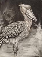 Shoebill Stork With a Cool Looking Beak by SassTheSassySasser