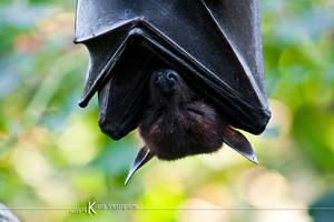 Batman - The real by Kiara-Vestigium
