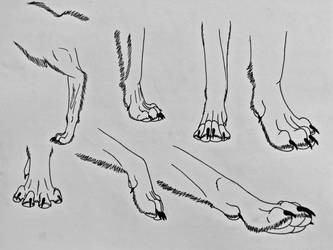 Wolf Studies 5- Paws 1 by Saberrex