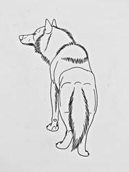 Wolf Studies 9- Rear View by Saberrex