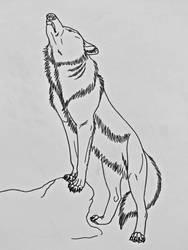 Wolf Studies 11- Wolf Howling by Saberrex
