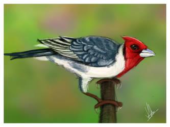 birdie by archys187