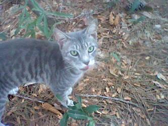 My little friend by gomamon2003