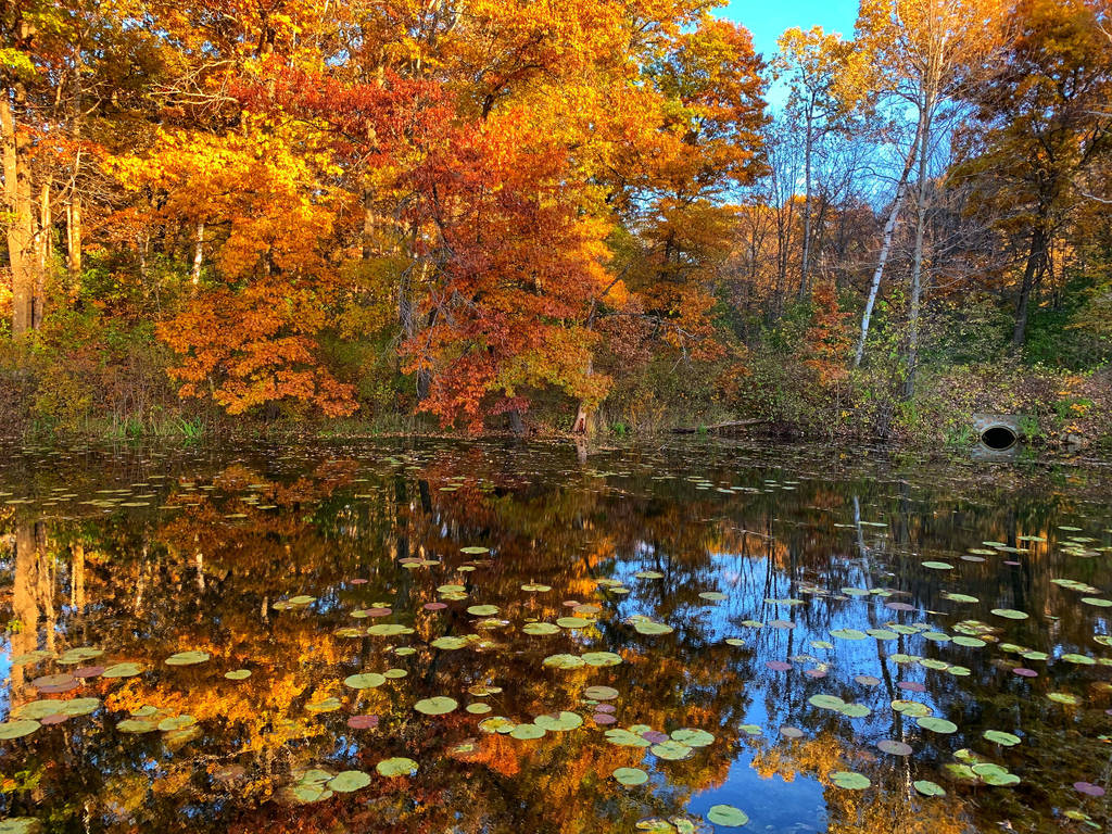 Last Gasp of Fall by simpspin