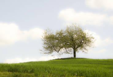 Tree Again by Lolipop66