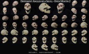 Different Angles of a Skull - Open Mouth REDONE by AshenCreative