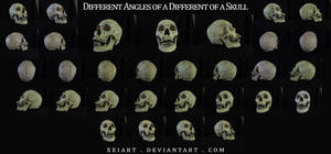 Different Angles of a Skull 2 by AshenCreative