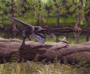 Anchiornis - new version by EWilloughby