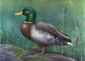 The Glorious Mallard by EWilloughby