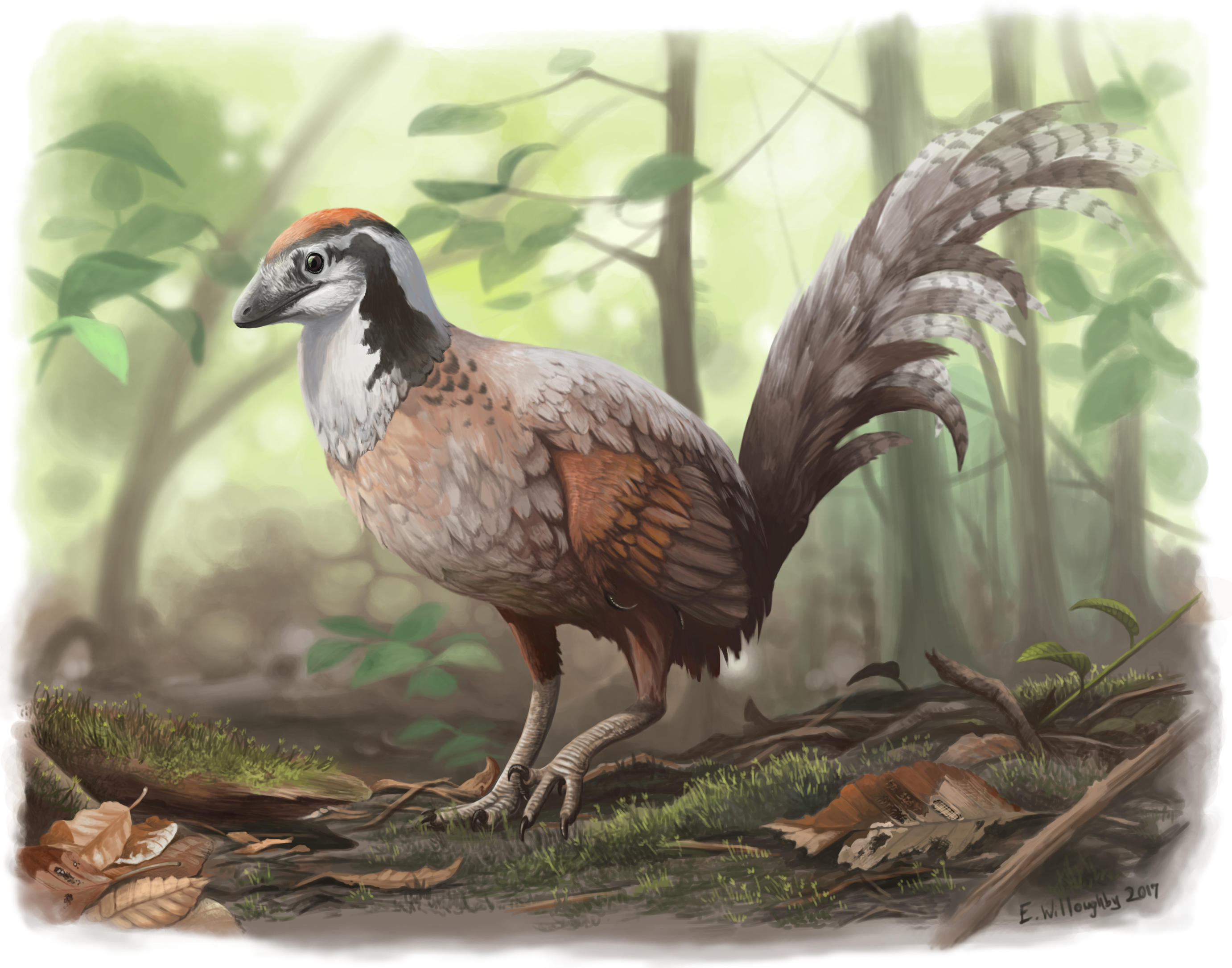 Jinfengopteryx Junglefowl by EWilloughby